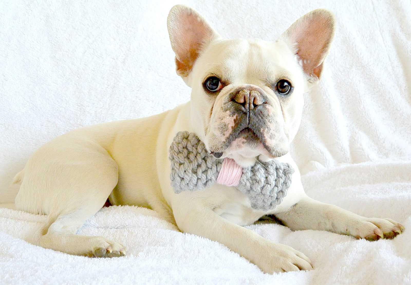 Stash Buster – Knit Bow Tie and Pom-Pom Collar