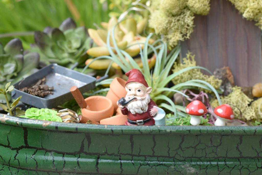 Fairy Garden Succulents on Budget